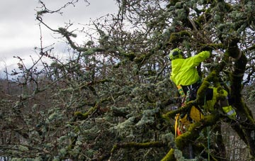 experienced Dartford arborists are needed