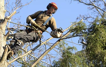 hiring experienced Dartford tree surgeons