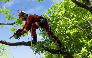 find trusted rated Dartford tree surgeons in Kent