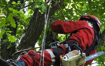 hiring professional Dartford tree surgeons