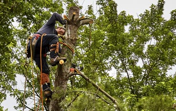 tree surgeon Dartford, Kent