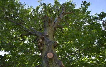 what is Dartford tree surgery?