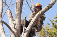 Dartford tree surgeon services