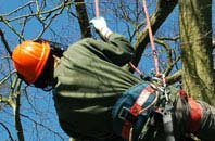 free Dartford tree surgeon quotes